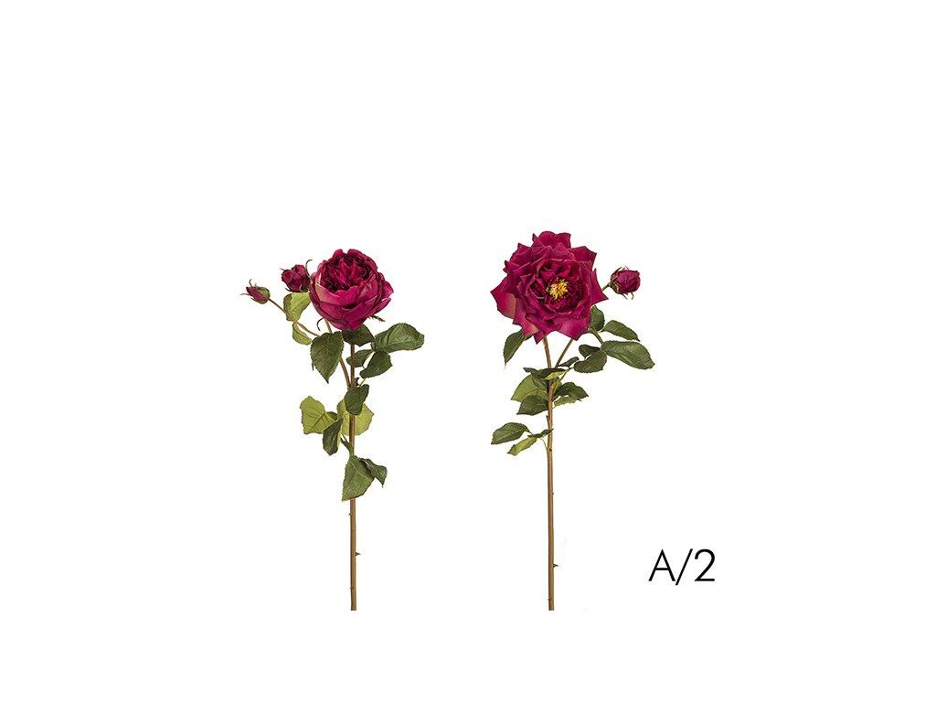 Růže DAVID