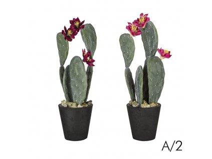 Kaktus v květináči