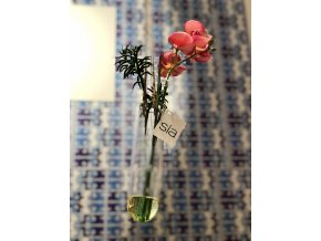 Živá voda Orchidea závěsná